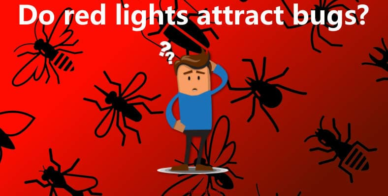 Do red lights attract bulbs man thinking