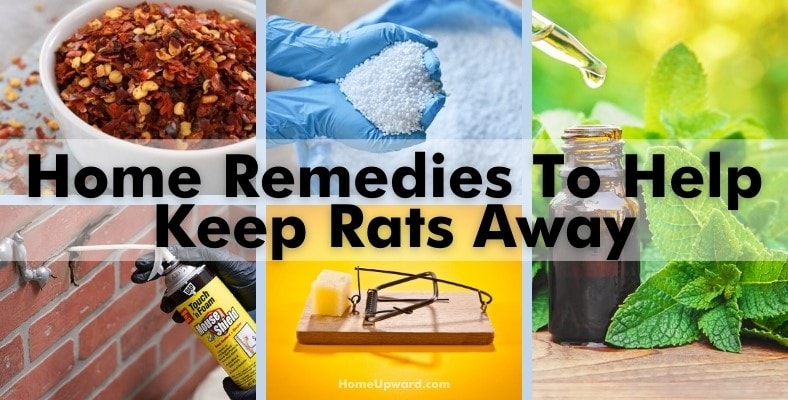 home remedies to help keep rats away