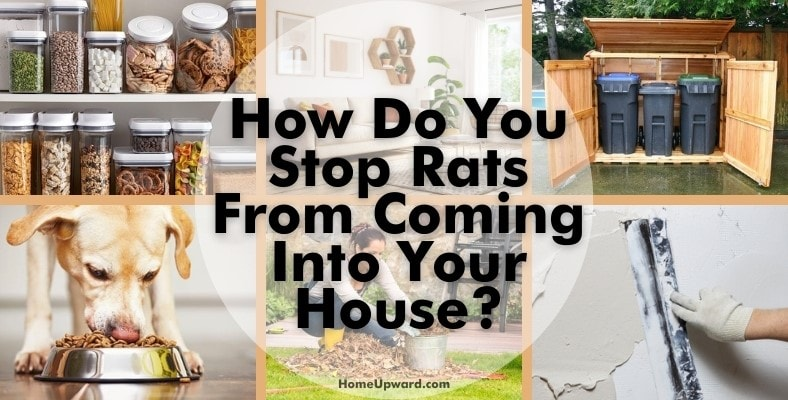 how do you stop rats from coming into your house