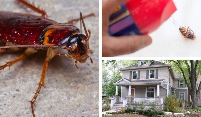 how to get rid of palmetto bugs in your home featured image