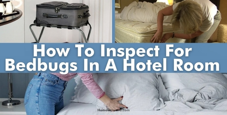 how to inspect for bedbugs in a hotel room
