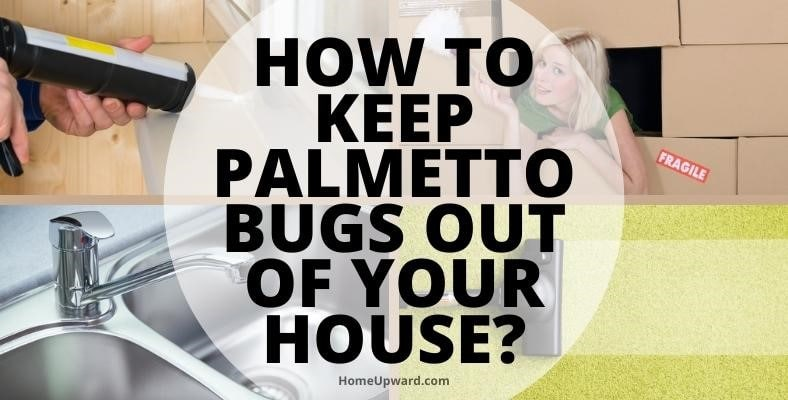 how to keep palmetto bugs out of your house