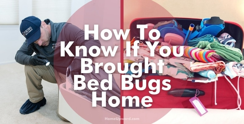 how to know if you brought bed bugs home