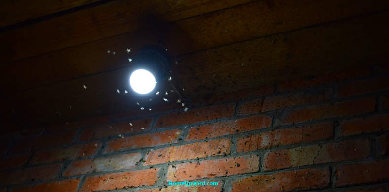 Insects attracted to outdoor light bulb and fixture