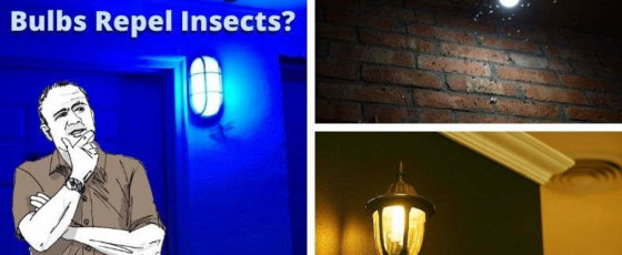 What Color Light Bulb Repels Insects? Bulb Color And Bug Facts