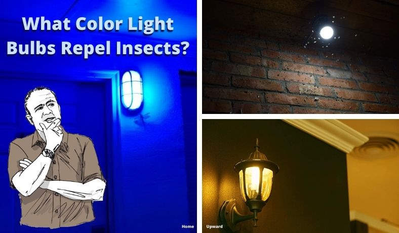 What color light bulb repels insects featured image