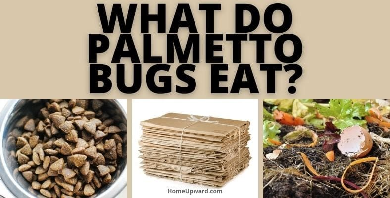 what do palmetto bugs eat