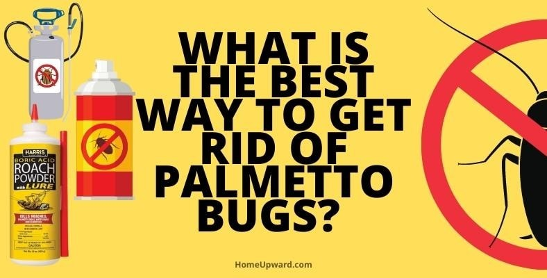 what is the best way to get rid of palmetto bugs