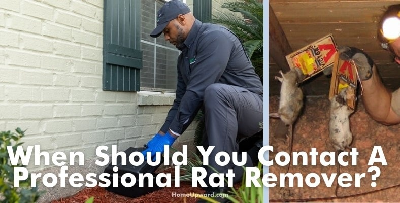 when should you contact a professional rat remover