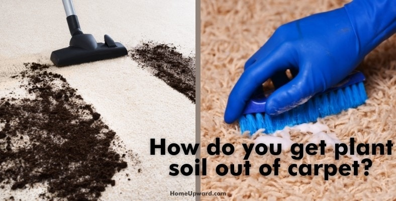 how do you get plant soil out of carpet