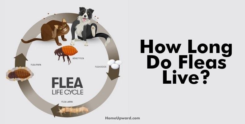 how long do fleas live