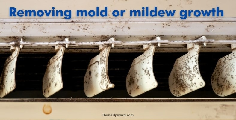removing mold or mildew growth