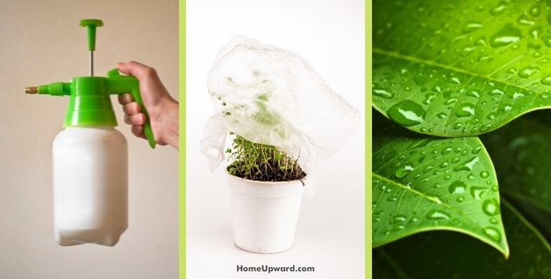 tips for protecting your plants during cleaning