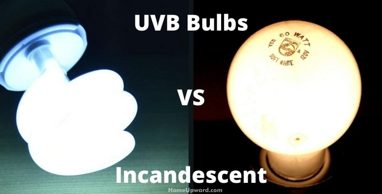 uvb bulbs versus incandescent differences