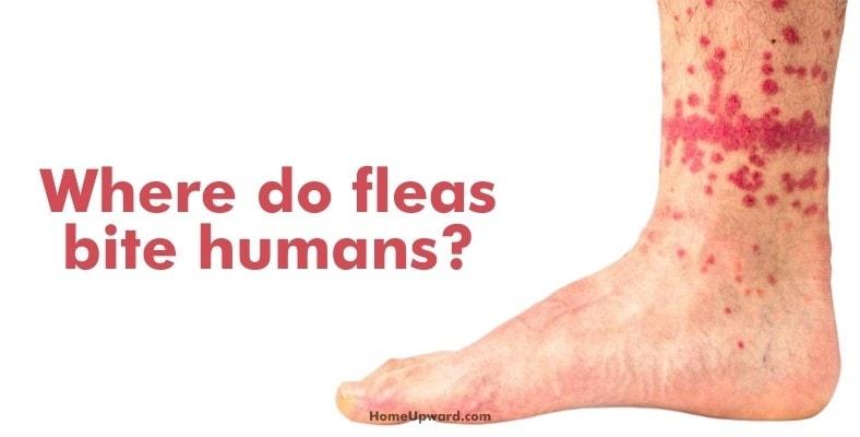 where do fleas bite humans