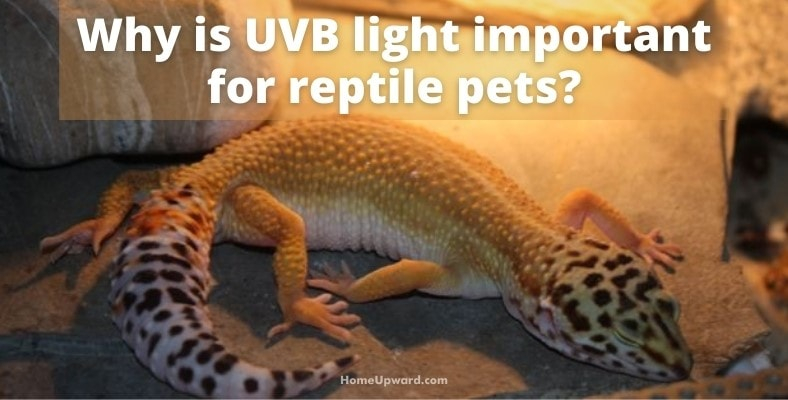 why is uvb light important for reptile pets