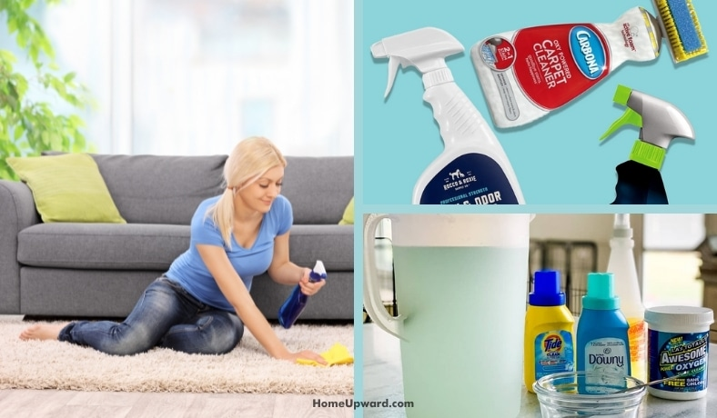 will carpet cleaning solution kill my outdoor plants featured image