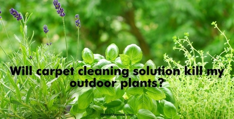 will carpet cleaning solution kill my outdoor plants